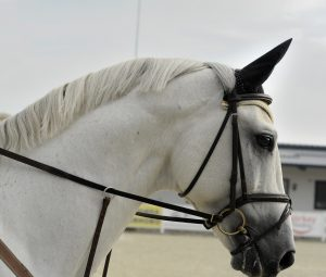 grey-mare-dsexecutive